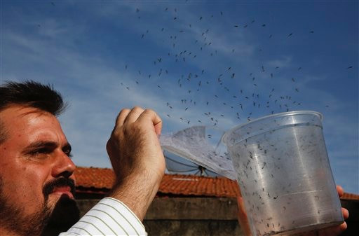 How this city in Brazil is eradicating mosquito-borne diseases