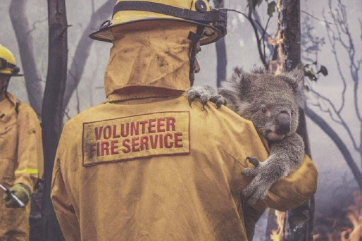 Raging Australia Fires Wreak Havoc on Local Wildlife