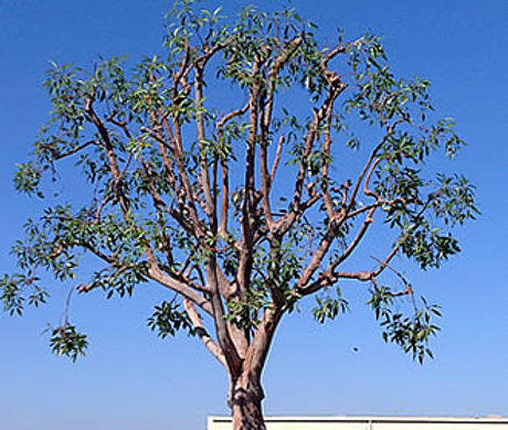 residential-tree-trimming.jpg