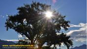 Innere Entwicklung mit der Unterstützung durch einen spirituellen Lifecoach