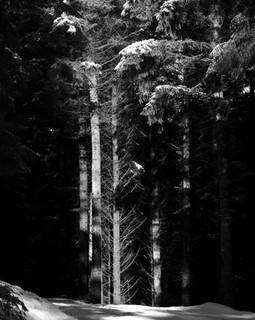 Light on Trees, 2019