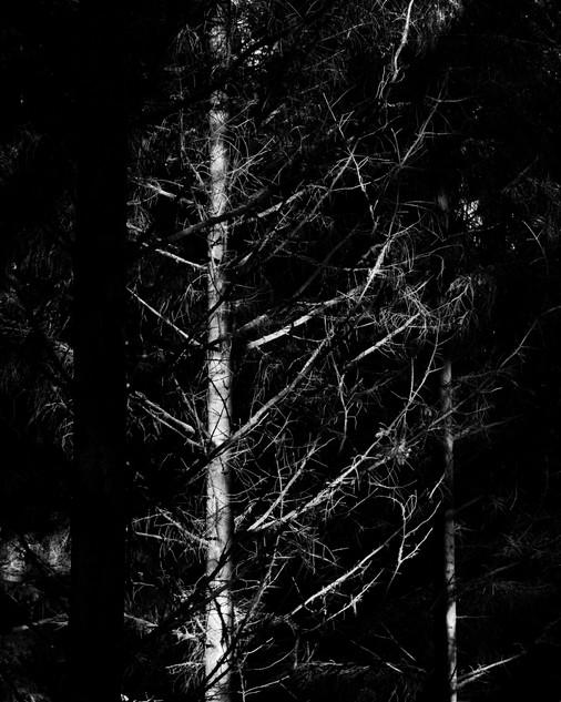 Light on Trees II, 2019
