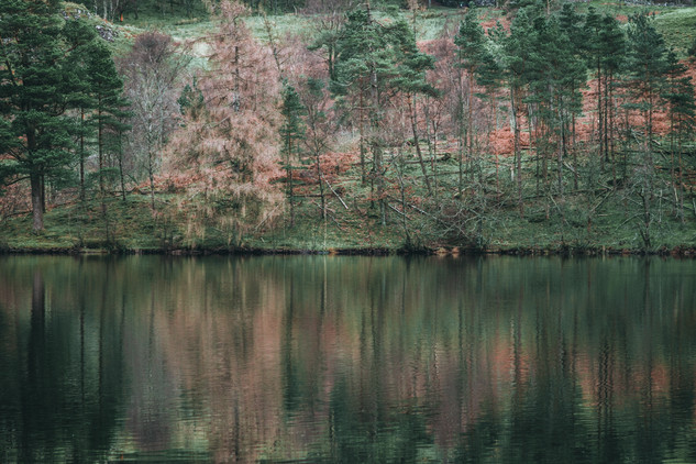 Tarn Hows Reflections, 2018