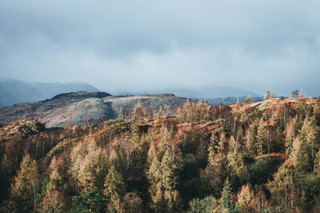 Autumnal Scenes at Tarn Hows, 2018