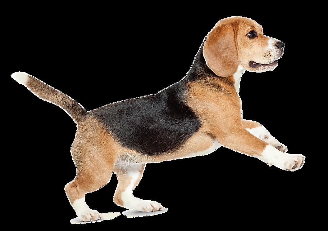 dog&ribbon Dog.png