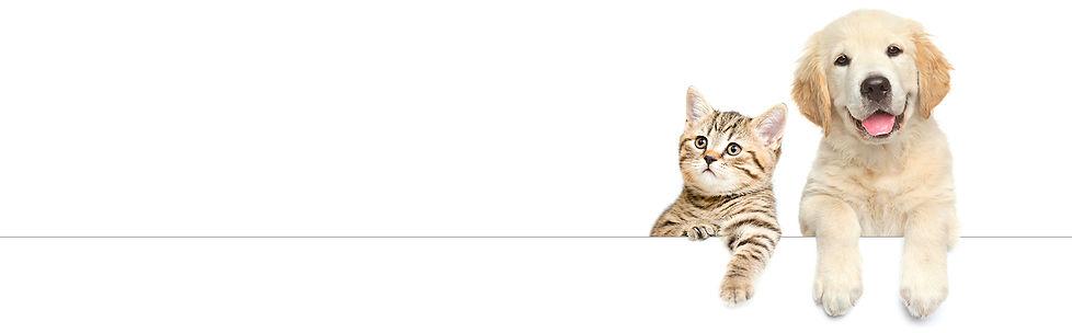 cat & dog line.jpg