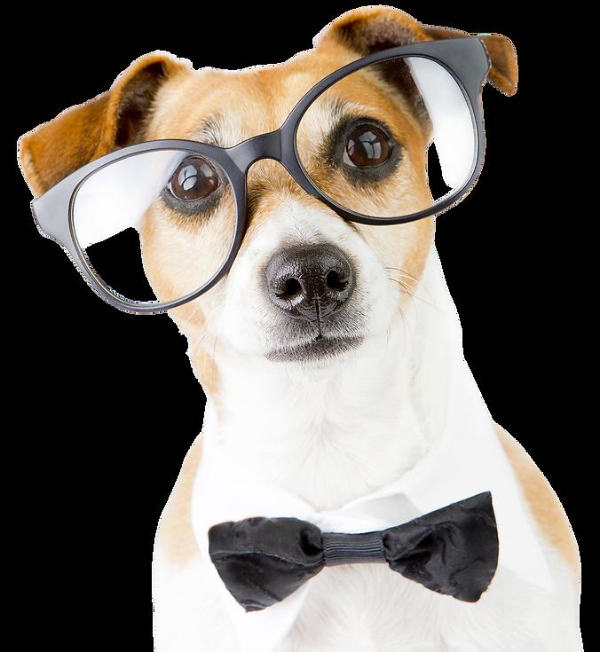 Smartpet Dog.png