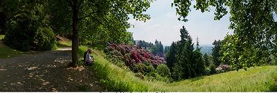 Parco della burcina Pollone -1250 fronte