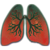 lung-4051083_1920.png
