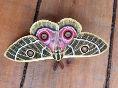 What do a moth and Lady Ross's Turaco tell us about our future?
