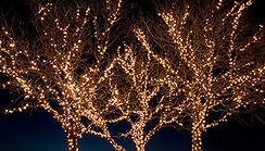 Christmas Lights Ponte Vedra Beach, FL