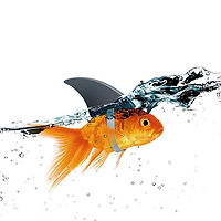 Commercial Videographers New York - Fish In Water