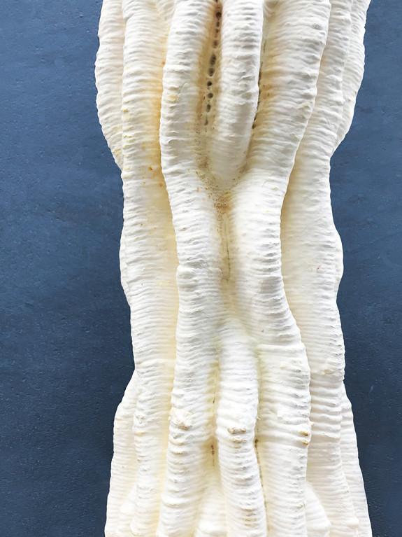 Cactus Column - 3d printed mycelium sculpture