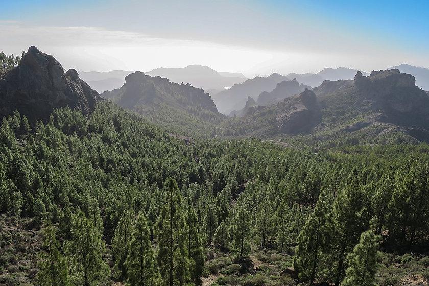 forest-1019246.jpg