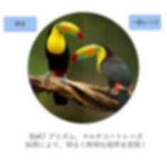 1000-9.jpg