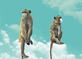 Monkeys on a cloud.jpg