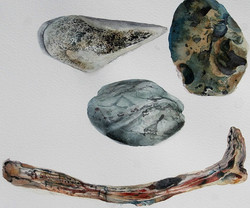 Sea collection 2 - study