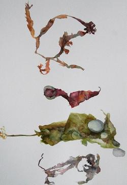 Seaweed study 1