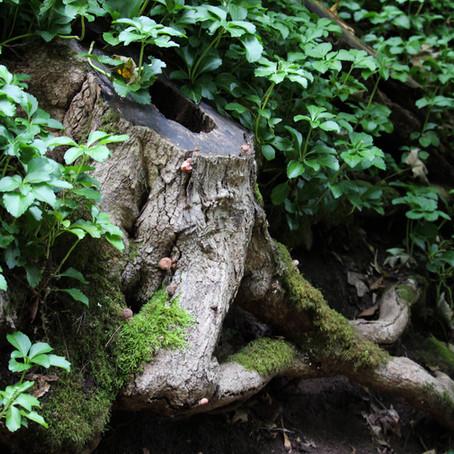 Sensing Root Glen