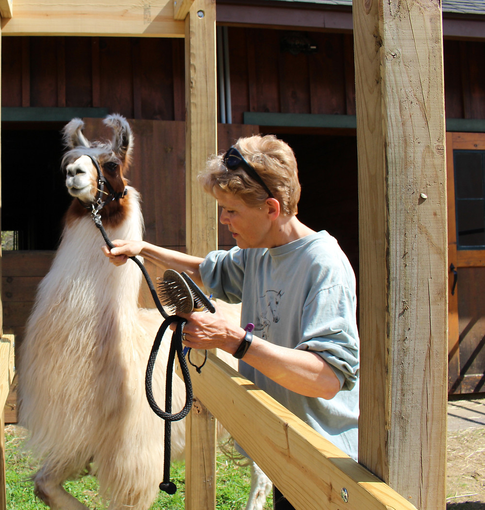 Anne Phinney and Adonis at Moose River Farm in Old Forge NY