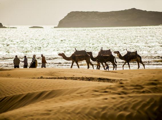 Activités à Essaouira