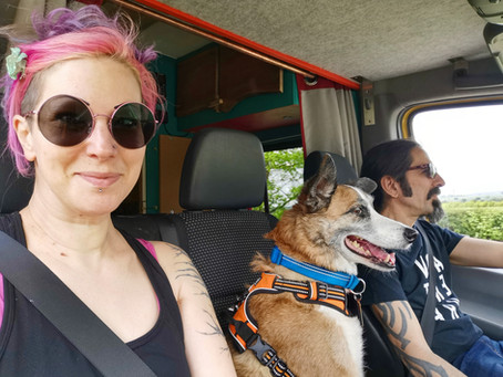All you need to know about vanlife with cats and dogs!