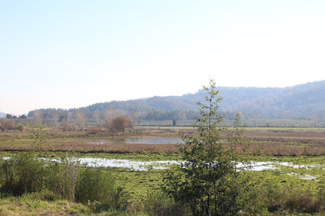 confluence 20.jpg