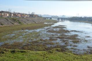 Foto_14_Río_Andalién_desde_el_puente,_vi