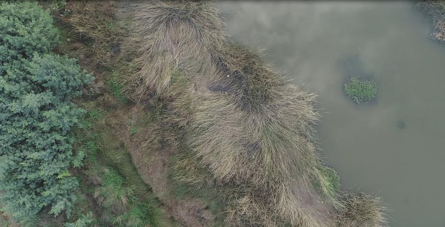 Detail Rocuant