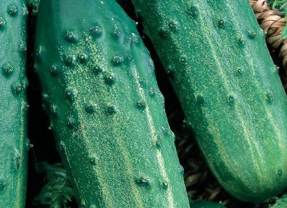 Concombre Sumter (semences) - Bio