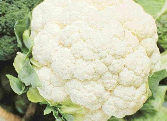 Chou-fleur Early Snowball (semences) - Bio