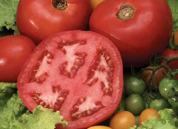 Tomate Beefsteak nain (semences) - Bio