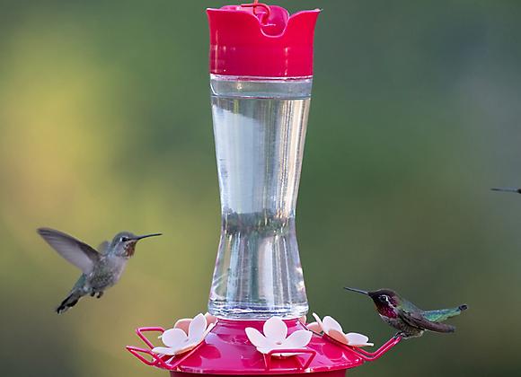 Mangeoire à colibri