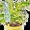 Thumbnail: Diffus'O iriso - arrosage goutte à goutte