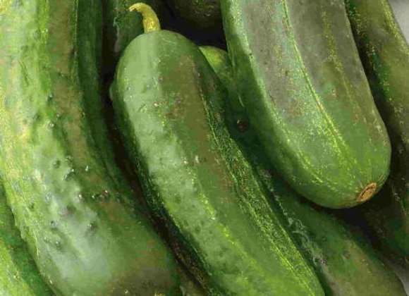 Concombre National Pickling ( semences) - Bio