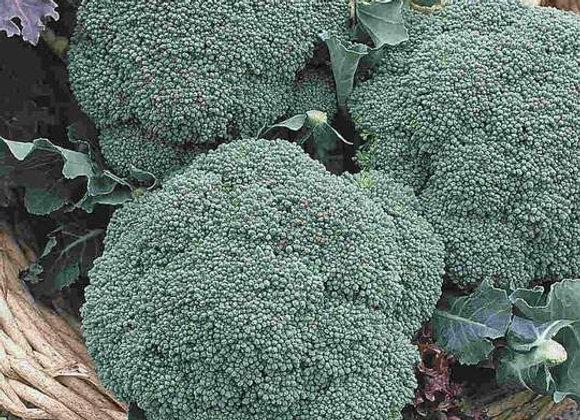 Brocoli à jets Green Sprouting (semences) - Bio