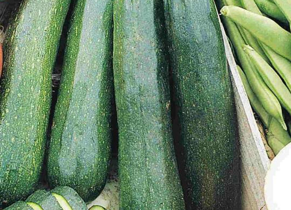 Zucchini Black Beauty (semences) - Bio