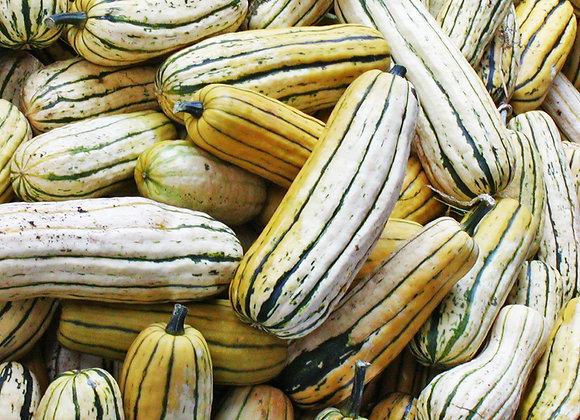 Courge Delicata (semences) - Bio