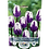 Thumbnail: Bulbes de tulipe - Blueberry Ripple