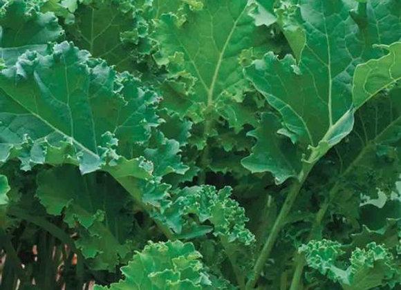 Chou frisé kale sibérien (semences) - Bio