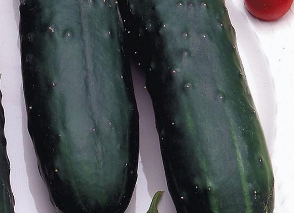 Concombre Marketmore (semences) - Bio