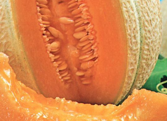 Cantaloupe Hearts of Gold (semences) - Bio