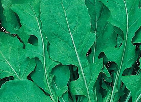 Roquette (semences) - Bio