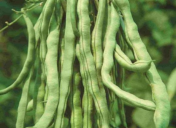 Haricot Kentucky Wonder rames (semences) - Bio