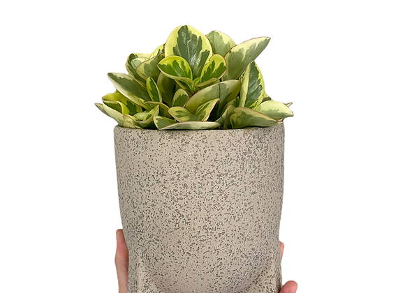 """Cache-pot 5"""" en céramique gris"""