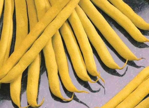 Haricot Golden Wax nain (semences) - Bio