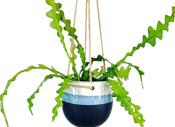Cactus Zigzag