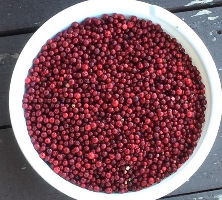 Bowl of wild cranberries
