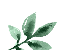 leaf4_edited.png