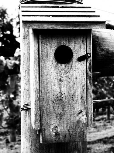 blue bird house.jpg